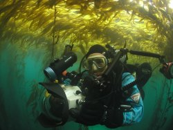 Clinton in Kelp