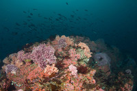 Hydrocoral and Rockfish