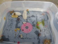 The Nudibranch Bin!