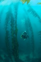 Kelly in Kelp Forest