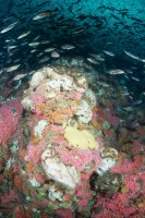 Sponges at Northern West Ridge.jpg